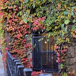 Ivy and brownstones