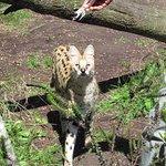 Tenikwa Wildlife Awareness Centre Foto