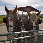 The Wine Carriage Foto