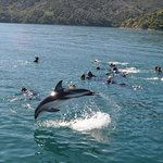 Just your average dolphin swim in the Queen Charlotte Sound