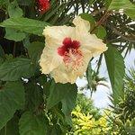 Photo of Holiday Saipan Resort