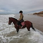 Anise in sea after a gallop