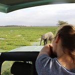 A traveler is marveled by a young bull elephant at Amboseli National park Kenya Mombasa safari t