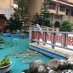 Koi fish pond at Lotus Wing