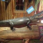 Alligatore all'ingresso
