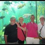Kelp tank display