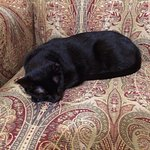 The black cat that lives at the inn