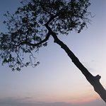 a tree near the resort