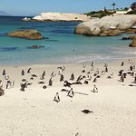 We visited the colony of Jackass penguins near Simonstown within the stretch of the coast charac