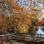 Botanischer Garten Rombergpark Foto