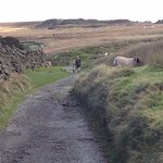 Man and his daughter walking the Bronte waterfall path