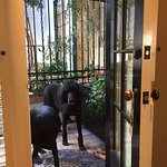 Our beasts! door opening to courtyard from our room