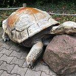 Heidelberger Zoo Foto