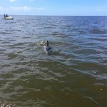 Dolphins between our two jet skis