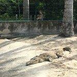 Foto de Chankanaab Beach Adventure Park
