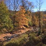 River view with fall foliage