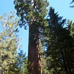 General Grant Tree - Sequoia National Park