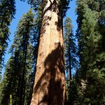 General Sherman Tree - Sequoia National Park