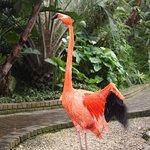 Birds of Eden Foto