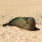 My friend the Monk Seal