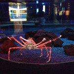 Ripley's Aquarium of the Smokies Foto