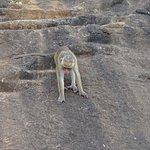Onnipresenti scimmie