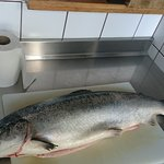 Le saumon du jour