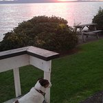 This is my pooch enjoying the sunset over the Firth of Thames.