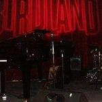 Birdland Foto