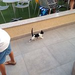 Hotel cats and fun at the beach