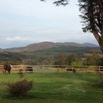 Horses outside Glencar House