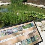 Centro de Rescate de Anfibios y Reptiles