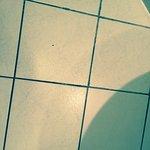 Zdjęcie 229018