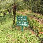 TikiVillas Rainforest Lodge Foto