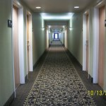 Hall; beautiful, clean carpet