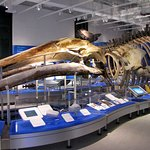 Visit the newly renovated Canadian Museum of Nature