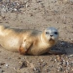 We even met a baby seal on the beach.