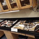 Cornell Lab of Ornithology Foto