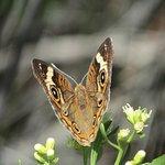 Moth along nature trail.