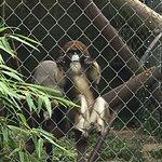 So many primates