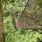 Boquete Tree Trek Foto