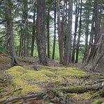 Anderson Bay Provincial Park
