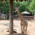 Dusit Zoo Foto