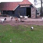 Center Parcs De Kempervennen Photo