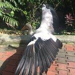 Foto de Parque de las Aves en Kuala Lumpur