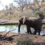 Tuningi Safari Lodge Foto