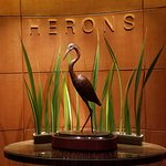 Herons Photo