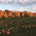 Fall foliage over the pumpkin patch at Devon Point Farm