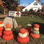 Pumpkin Stacks! The best place to get flat-shaped pumpkins for stacking!