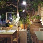 Lemon Tree Garden Foto
